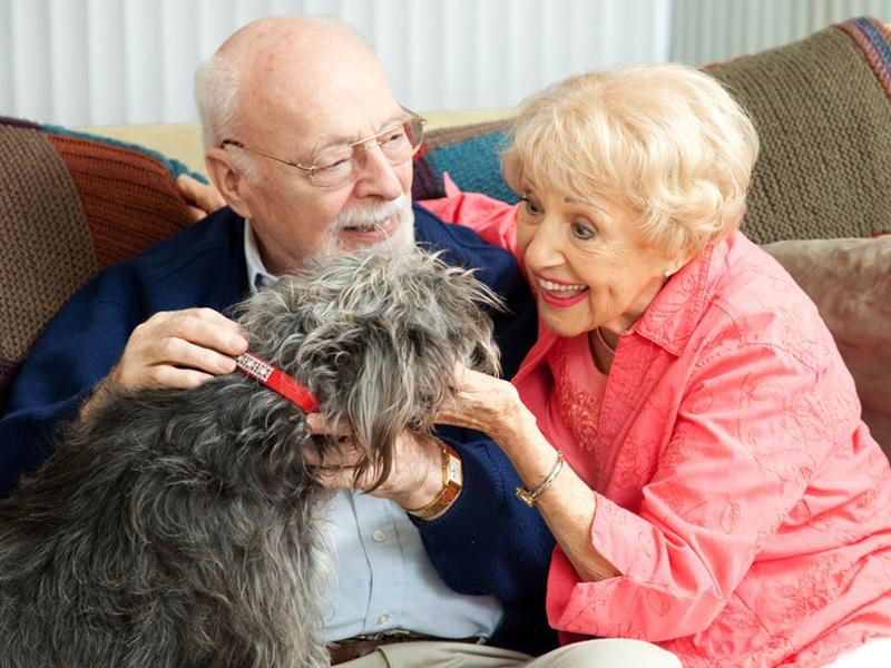 Los ancianos y los animales: Beneficios de tener una mascota